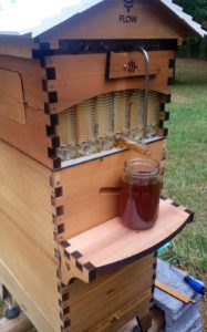 a tap drawing honey from a beehive