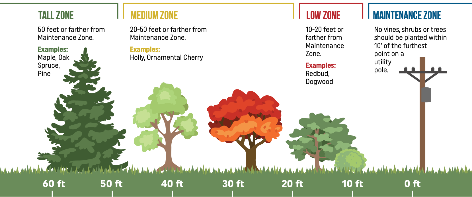 Tall Zone: 50 feet or farther from Maintenance Zone. Examples: Maple, Oak Spruce, Pine. Medium Zone: 20-50 feet or farther from Maintenance Zone. Examples: Holly, Ornamental Cherry. Low Zone: 10-20 feet or farther from Maintenance Zone. Examples: Redbud, Dogwood. Maintenance Zone: No vines, shrubs or trees should be planted within 10' of the furthest point on a utility pole.
