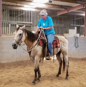 Veteran riding horse inside
