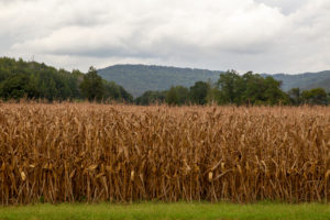 field by highway